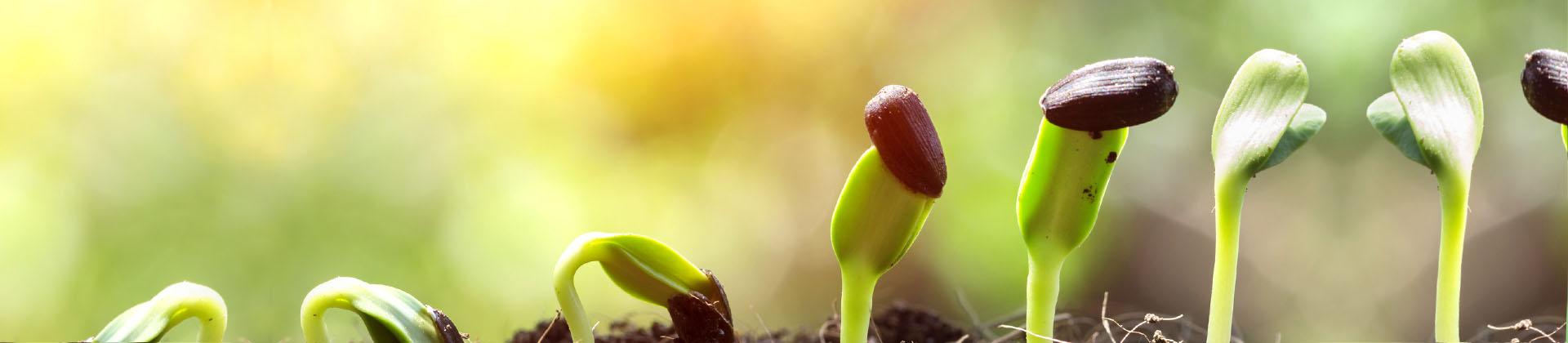 nasiona roślin