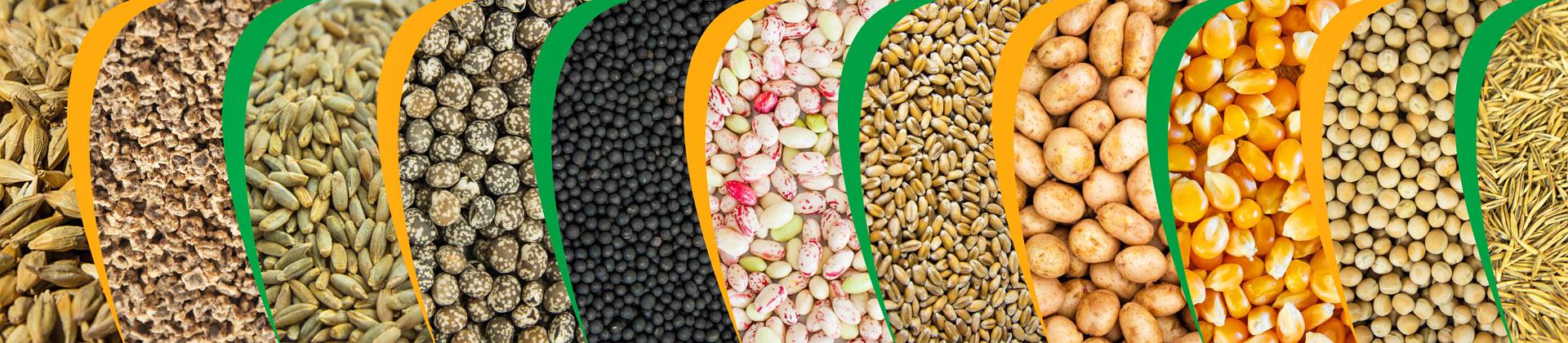 panstwowa_izba nasienna nasiona kwalifikat